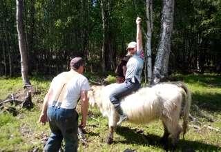 Highland Hugs Cow Camp