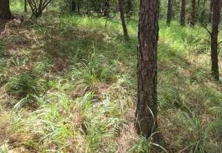 Cocu Forest