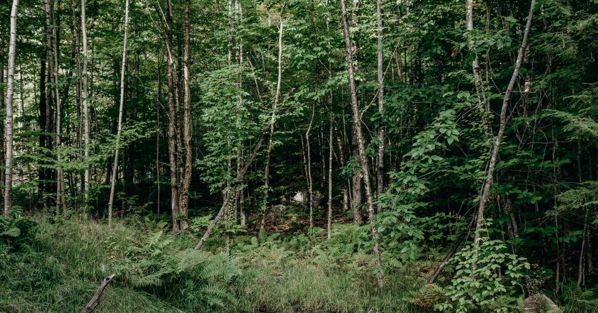 The Birdie Treehouse Maine Treehouse Rentals Me 2