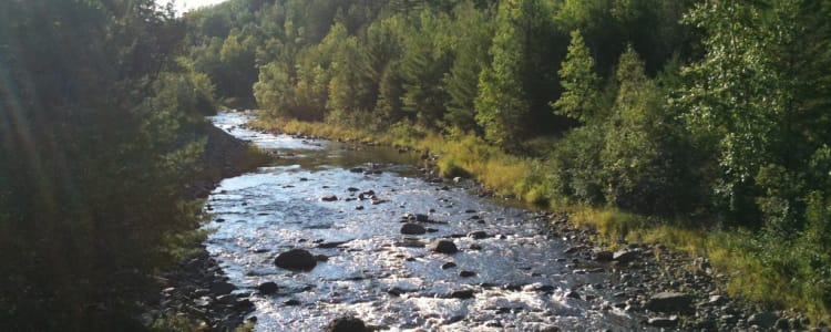 Best Camping In And Near Copper Falls State Park
