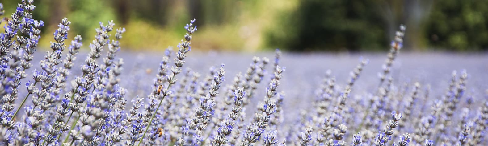 Nannup Lavender Tranquil Campground