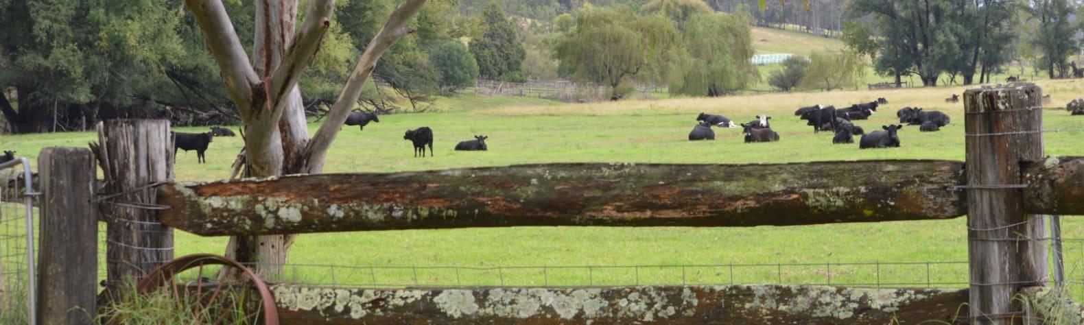Mungerarie Farm