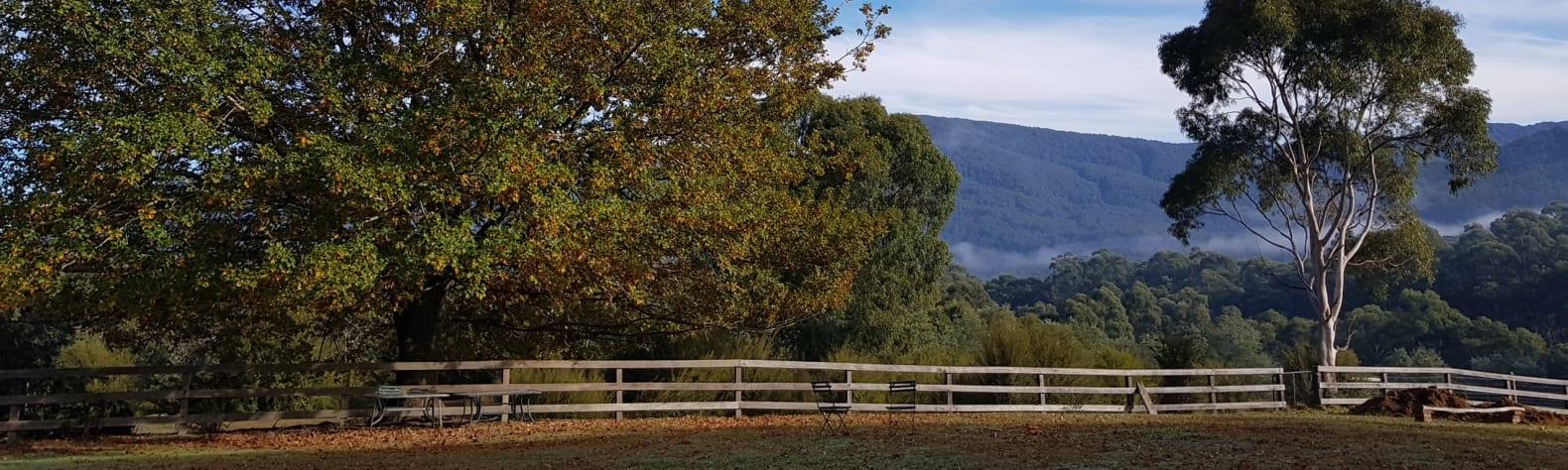 Iron Brook Donkey Farm