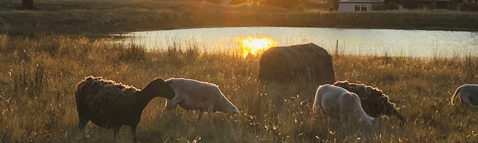 Mornington Country Getaway.
