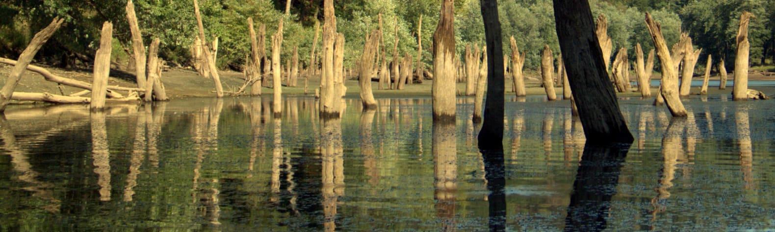 Mahoning Creek Lake