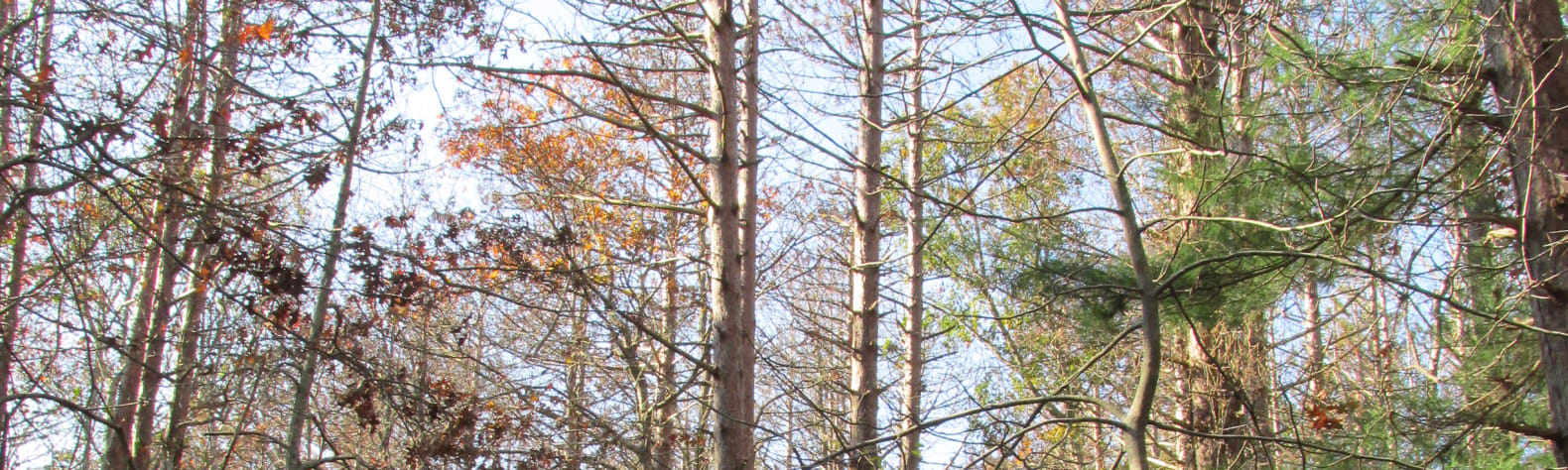 Shawme-Crowell State Forest