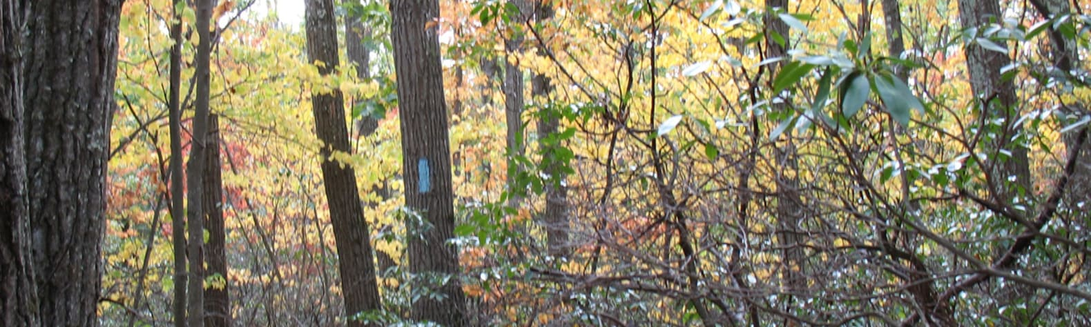 Tunxis State Forest