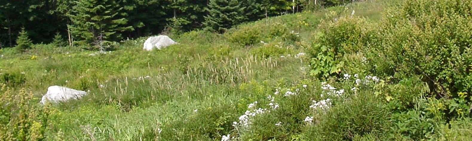 Richardson Public Reserved Land