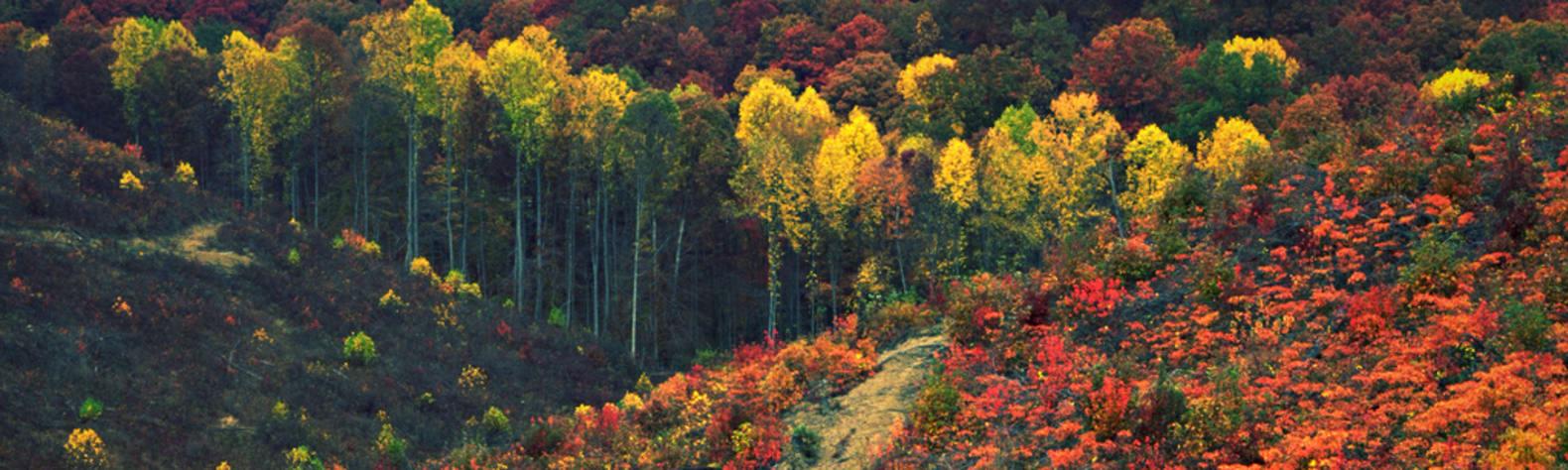 Shawnee State Park OH