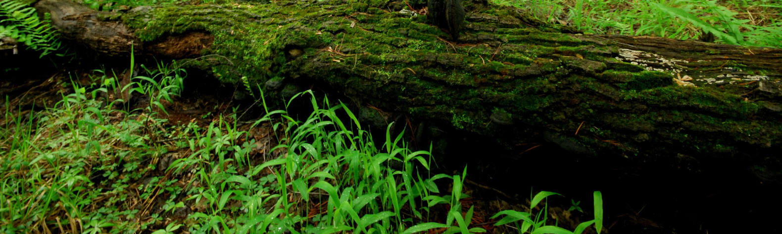 Black River State Forest