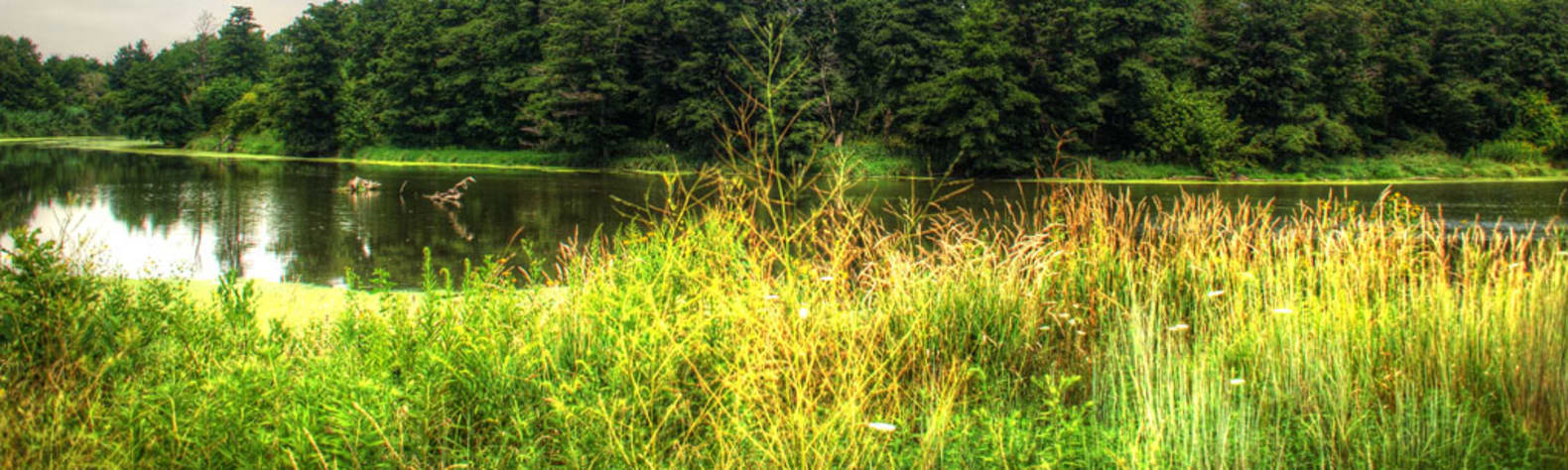 Des Plaines Fish & Wildlife Area