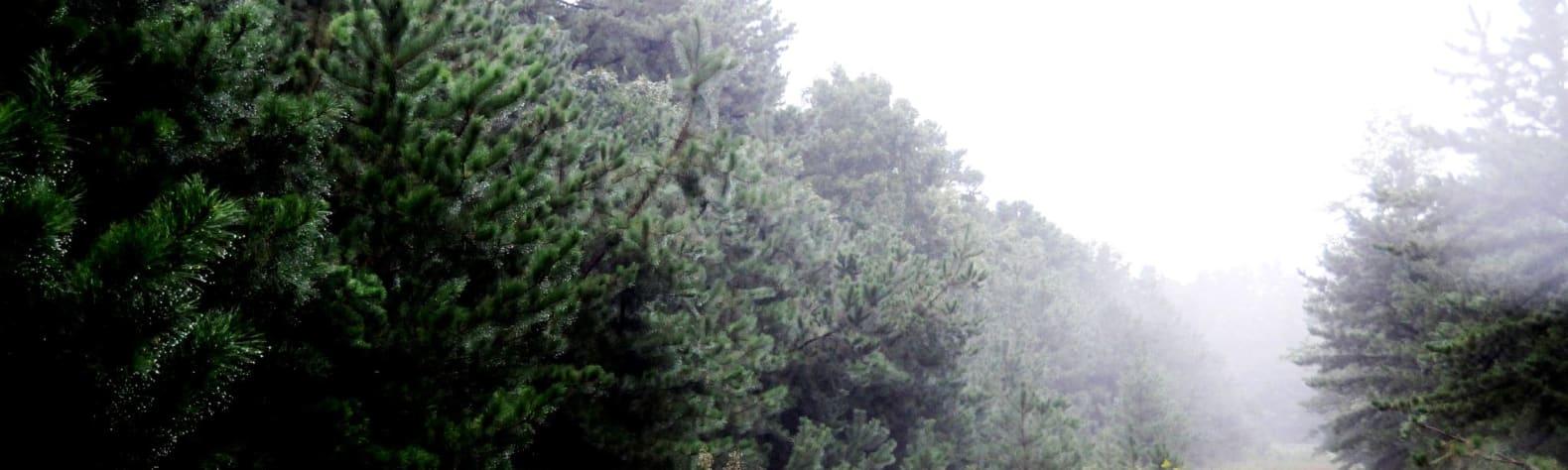 Sand Ridge State Forest
