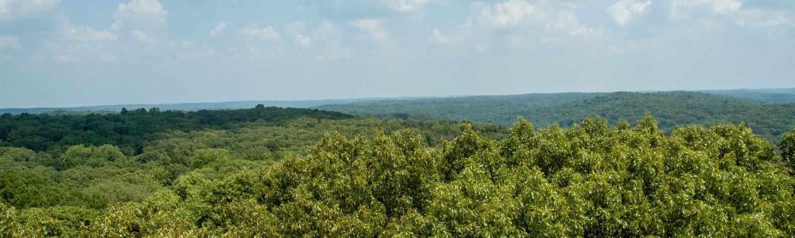 Martin State Forest