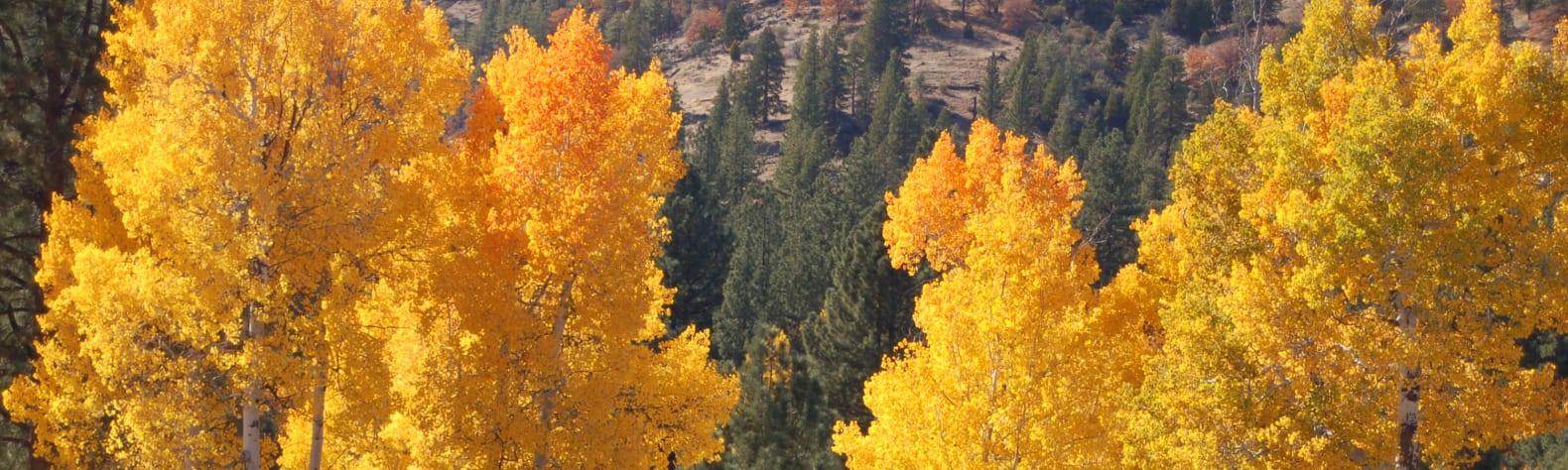 Plumas National Forest