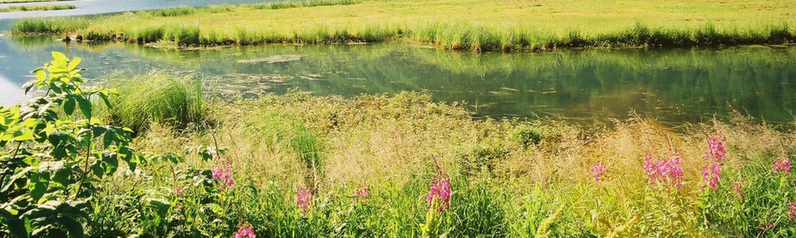 Kenai River Special Management Area