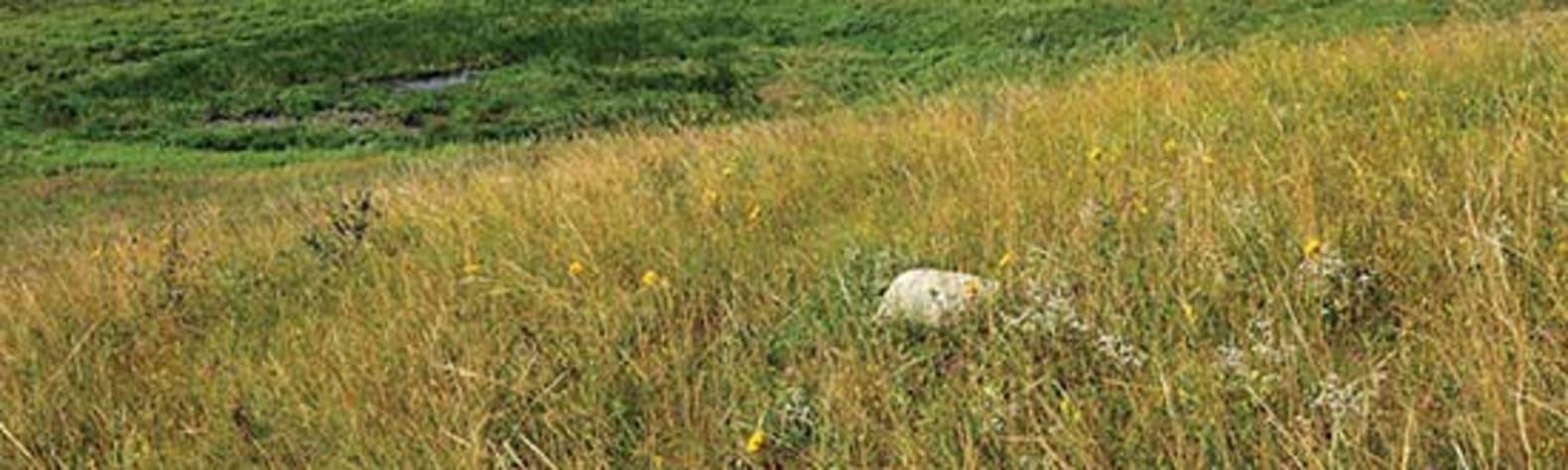 Dakota Prairie National Grassland