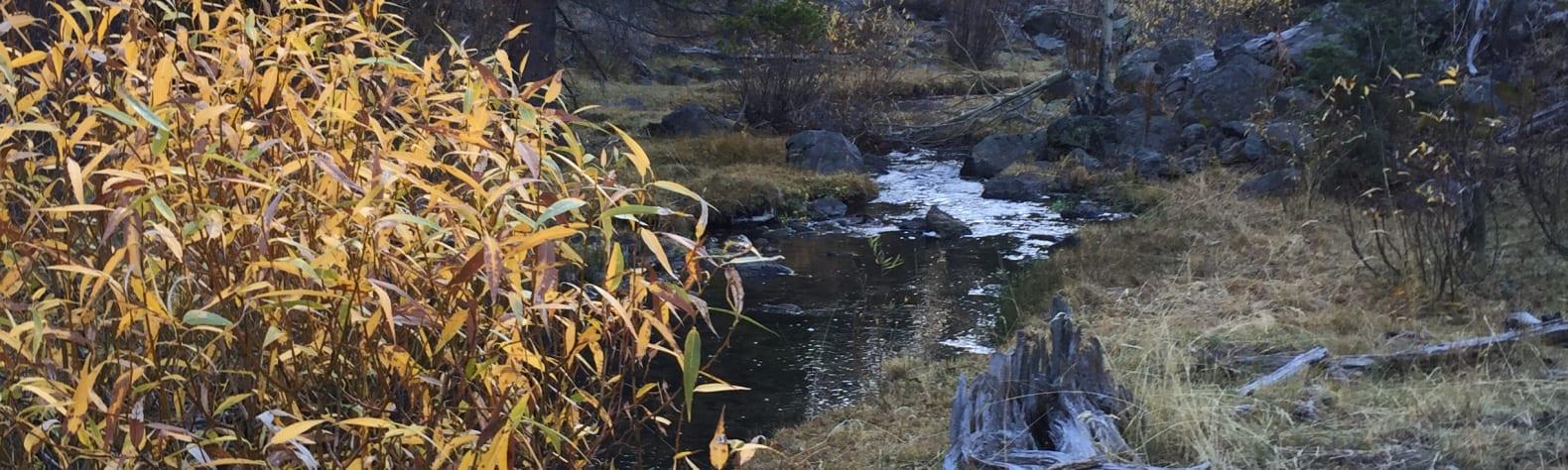 Fremont-Winema National Forest
