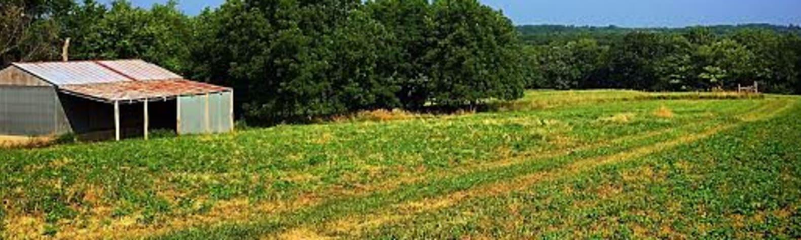 Roots, Fruits & Greens Farm