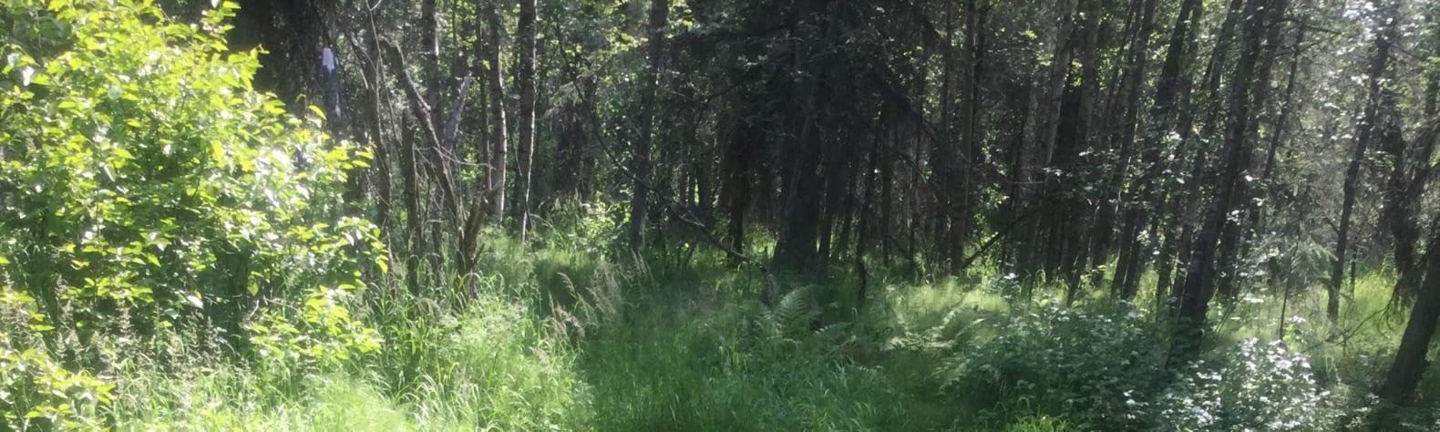 Possum Creek Camp