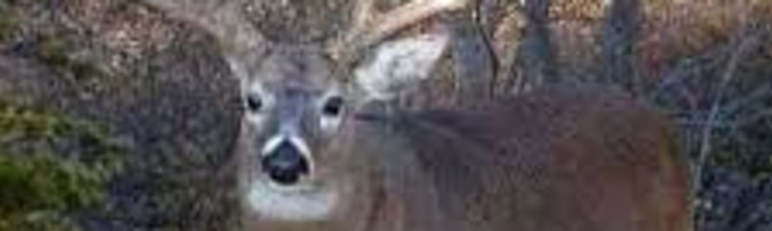 8 point crossing