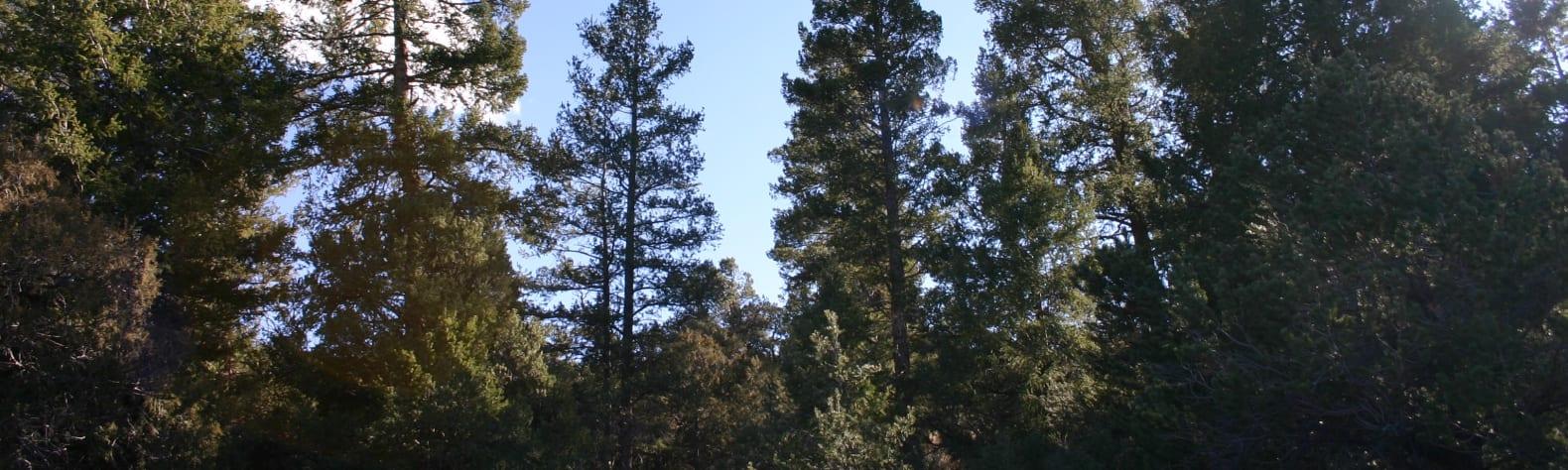 Pablo's Rancho Camp