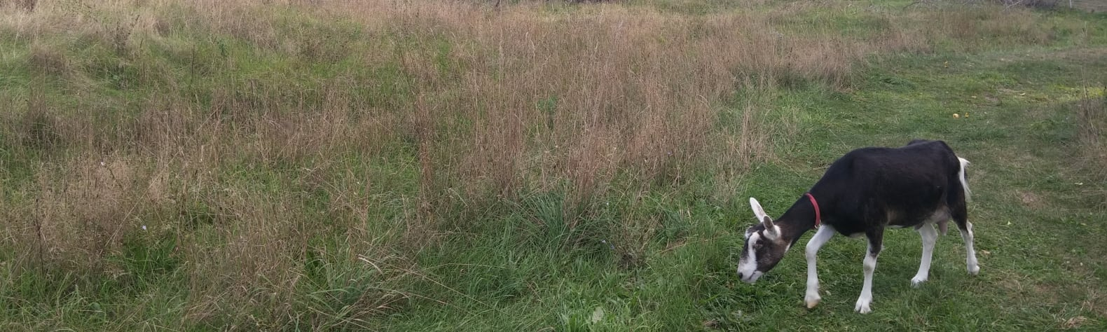 Three Cedars Farmstead
