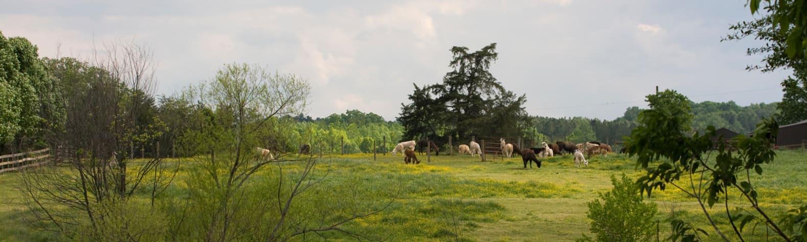 Lower Sherwood Farm