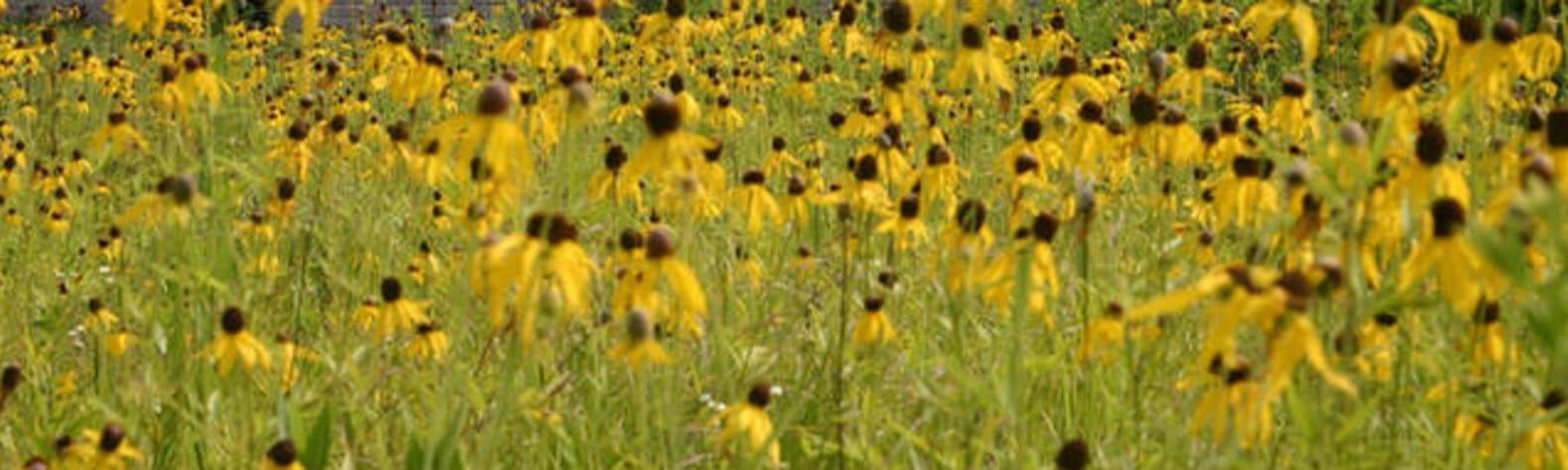 Peace on the Prairie