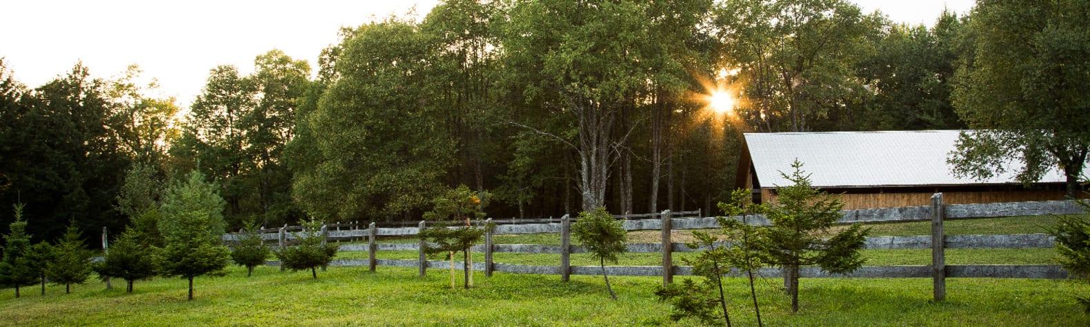 Trailside Ranch Cabin Rentals