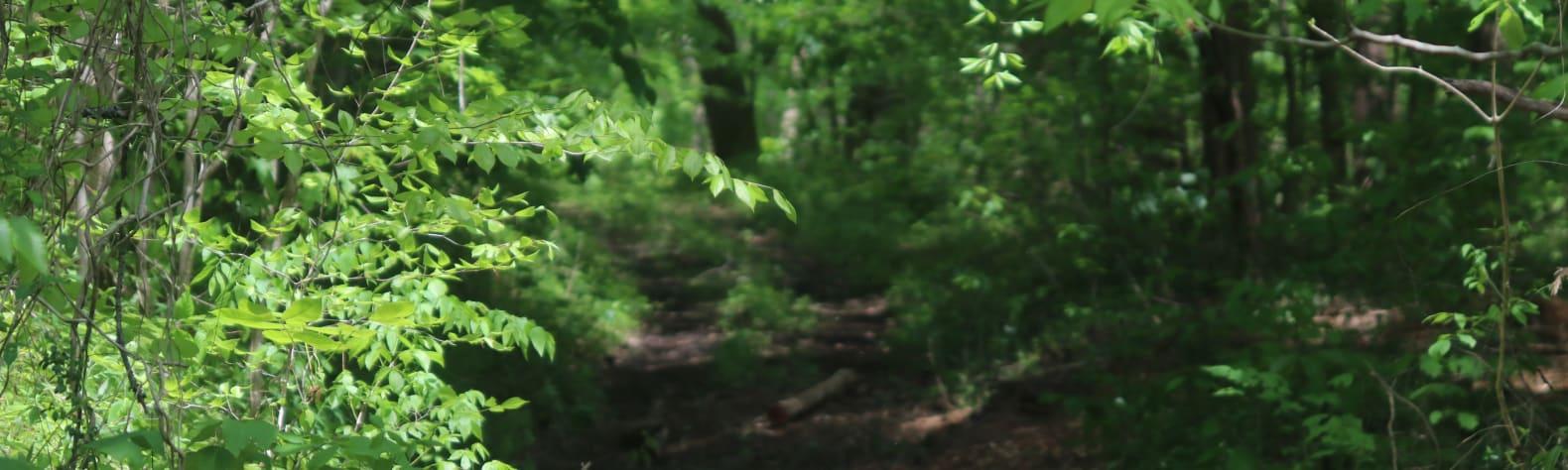 Neeley Creek F.'s Land