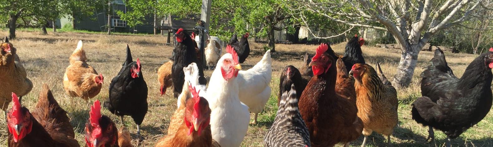 SHAMBA Farm