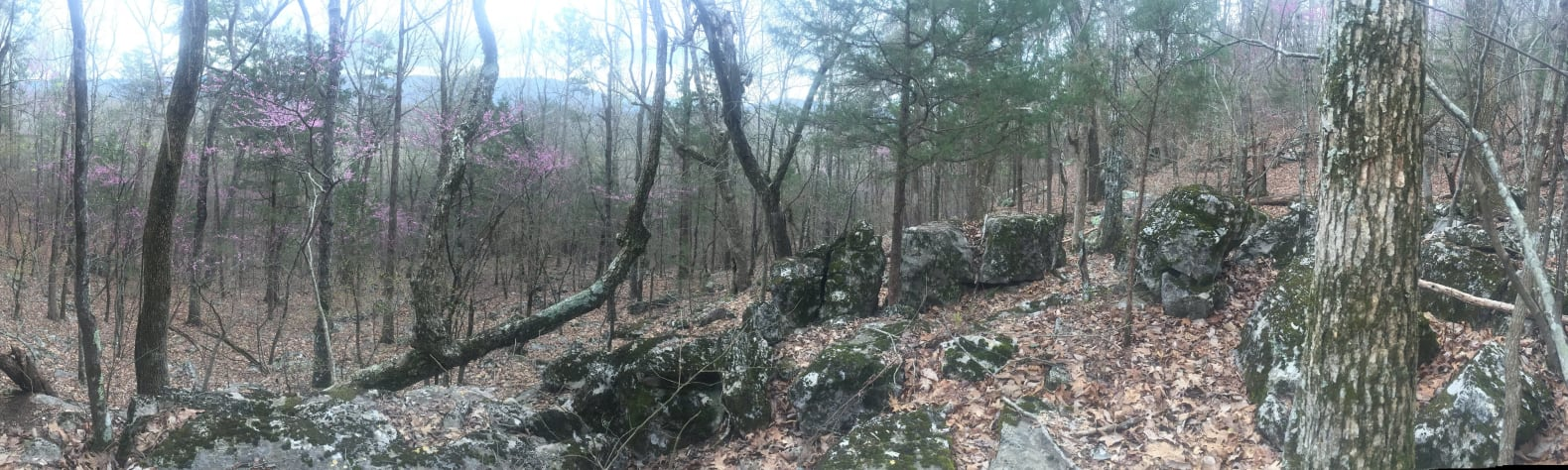 Forest at Sand Mountain