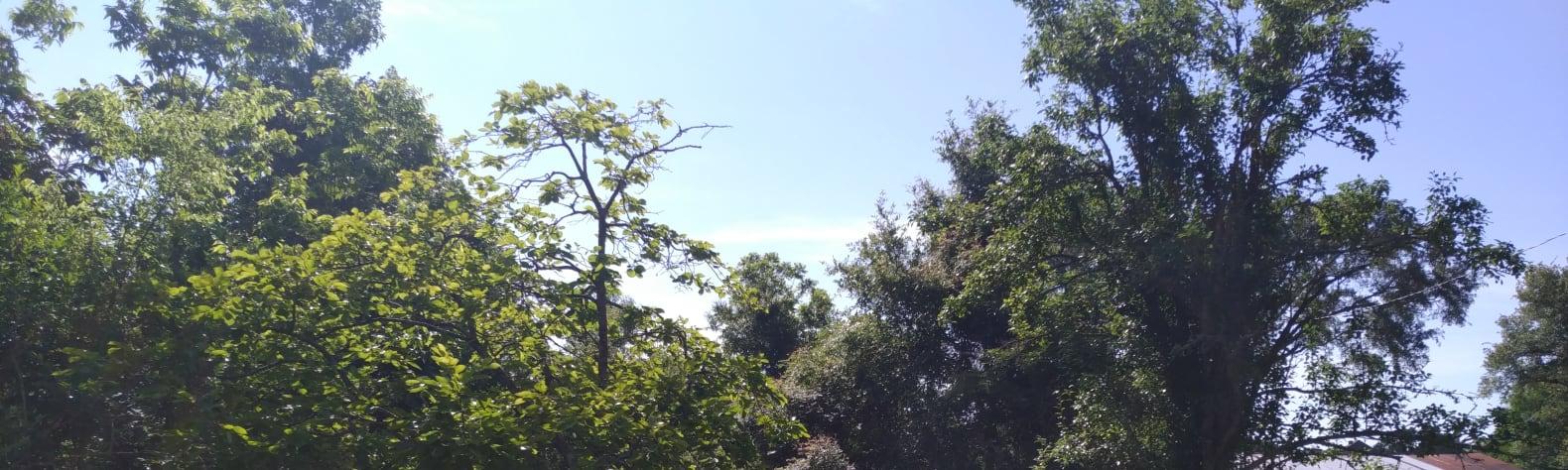 Tot and NUNU's land