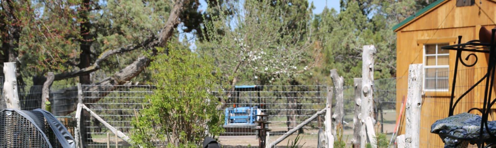 The Honeybee Ranch