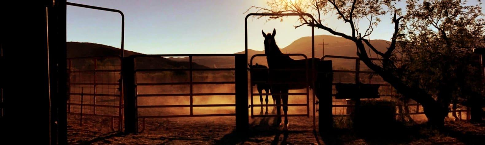 Southern Arizona Guest Ranch