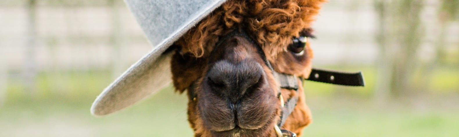 Windbreak Farm Alpacas