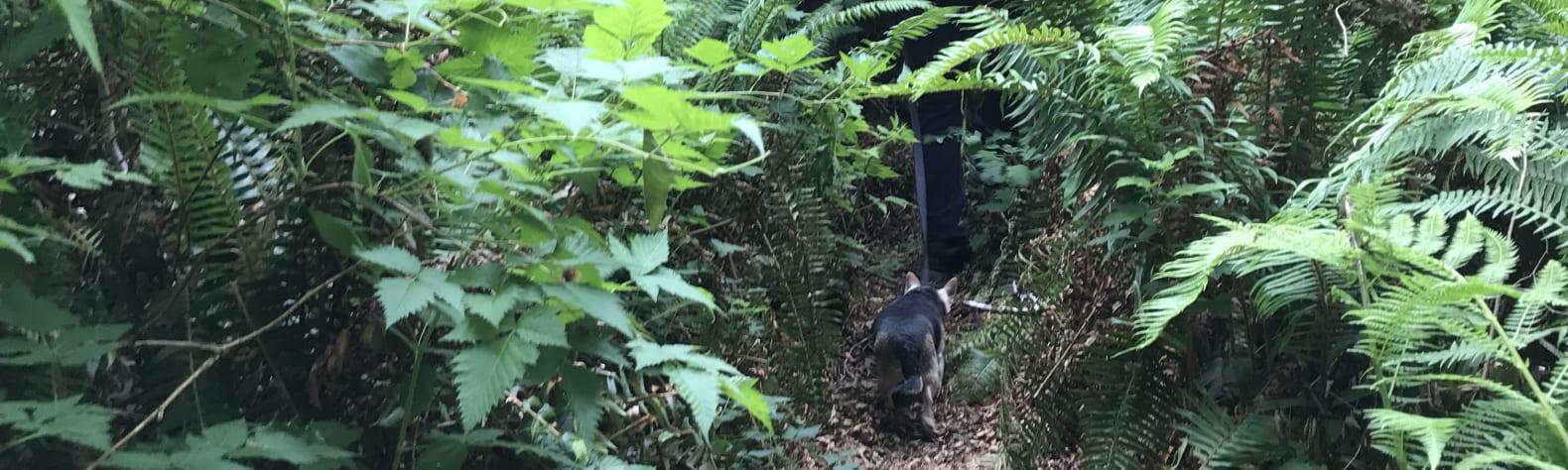 Rainforest outdoors