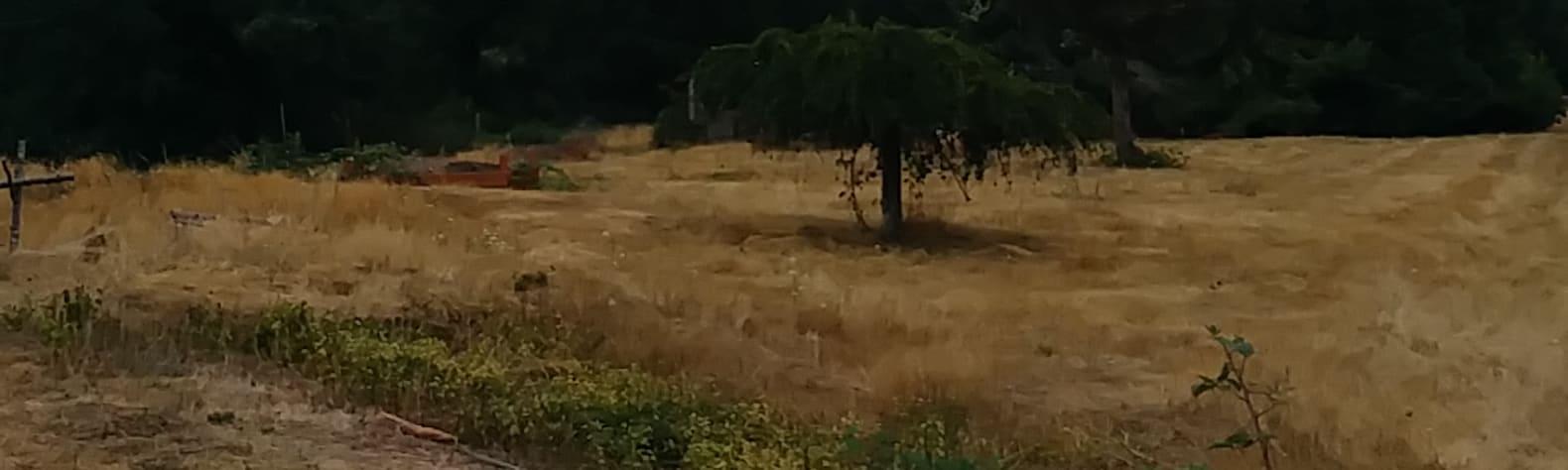 Woodland Hills Ranch