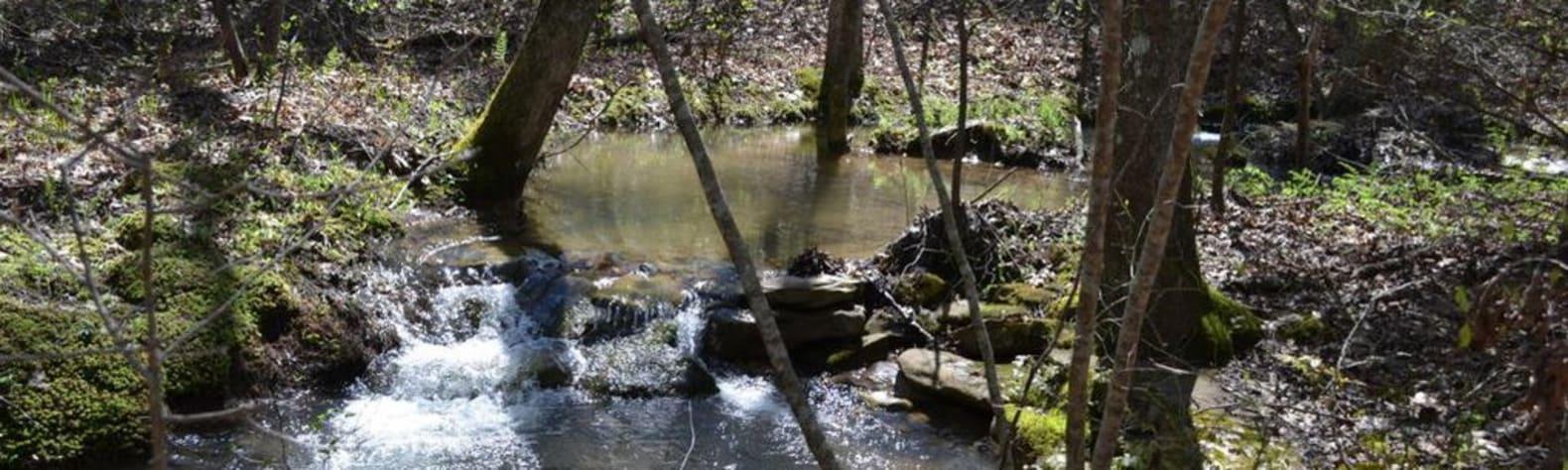 Gizzard Creek Farm