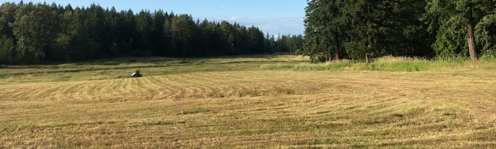 The Farm on Van Wyck