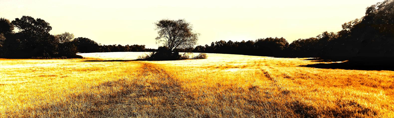 Kelly W.'s Land