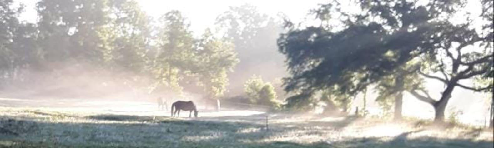 North FL Equestrian Short Stay