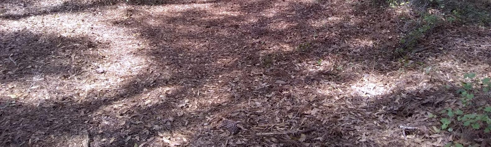 Gators nest