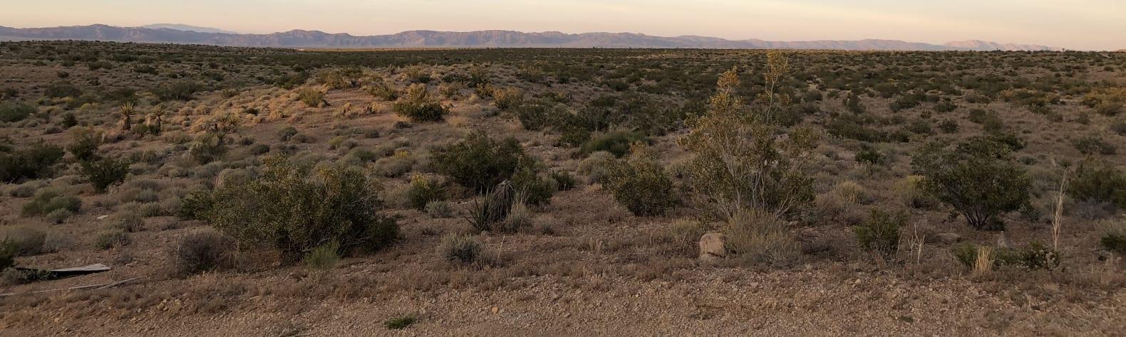 Aj P.'s Land