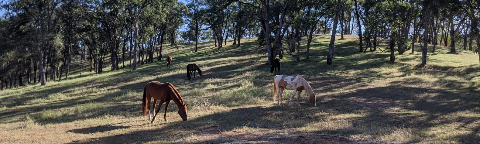 Ascension Ranch
