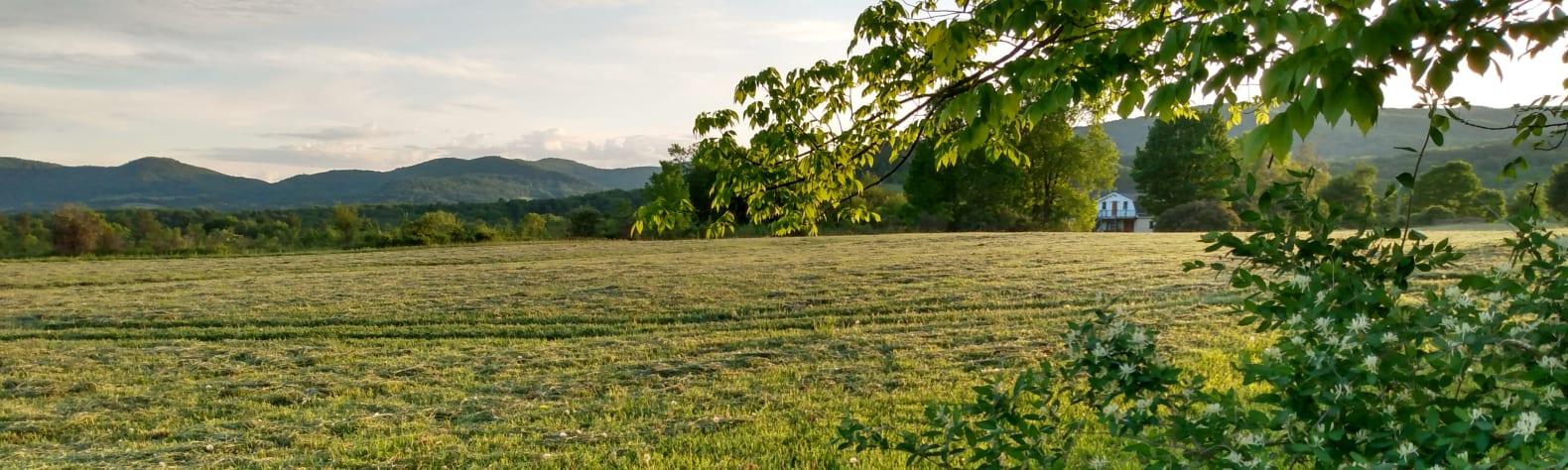 Kimberly D.'s Land