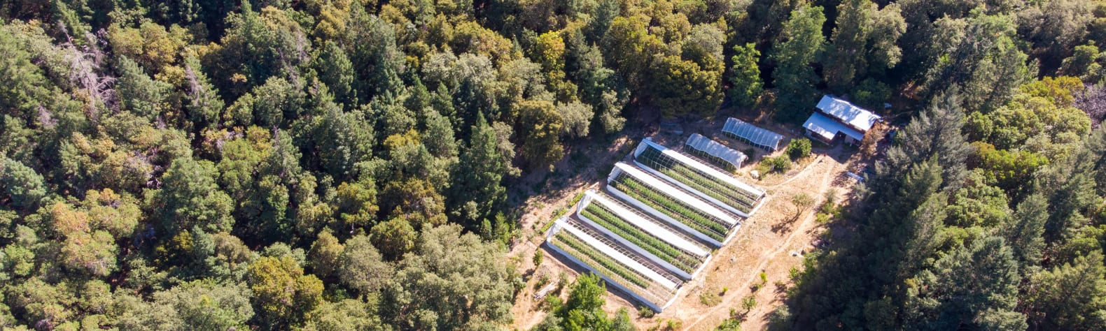 Sol Spirit Farm