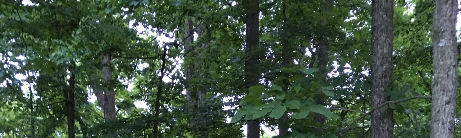 Finksburg Forest