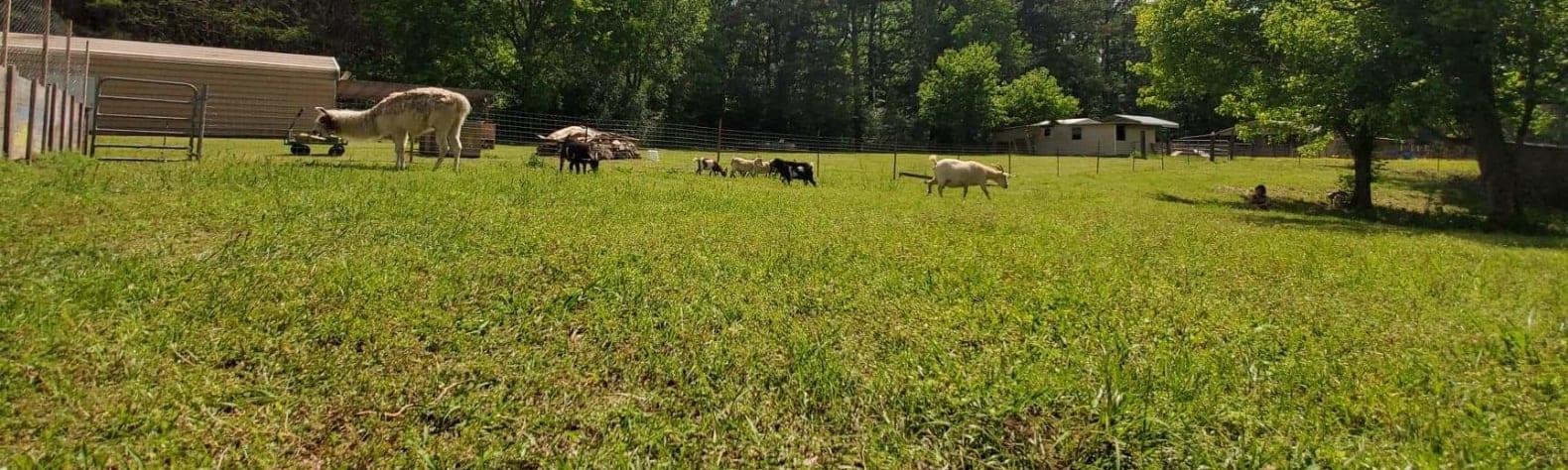Crystal Valley Farm
