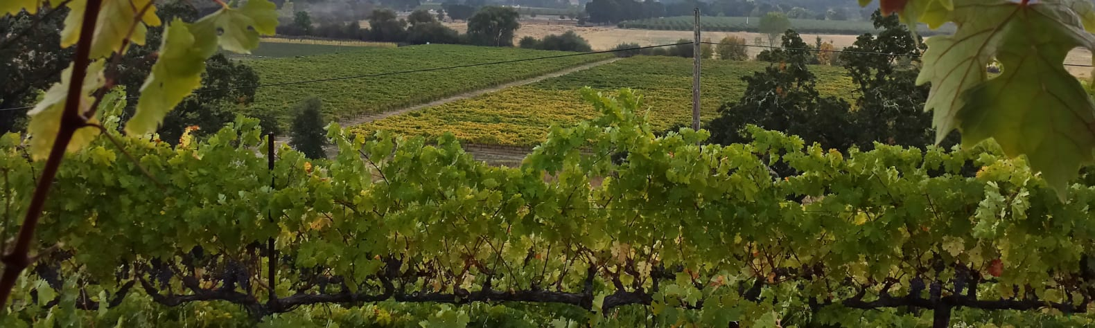 Nelson Family Vineyards